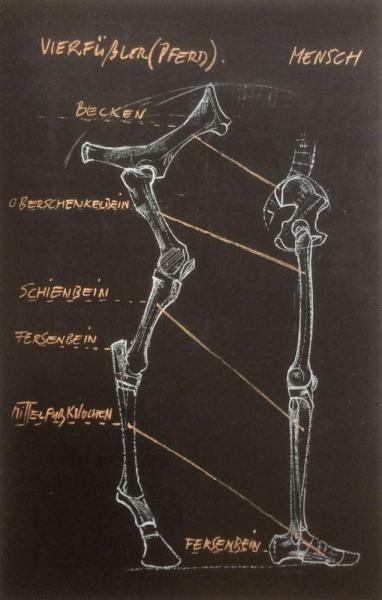Bipedal vs Quadrupedal