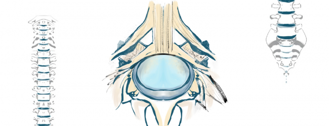 Una visione alternativa della colonna vertebrale? la colonna dei Dischi