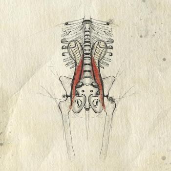 Bozzetto Anatomico Psoas in Continuità